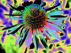 Imagine this image six feet wide!!  Wow! http://toula-mavridou-messer.artistwebsites.com/featured/new-photographic-art-print-for-sale-pop-art-flower-toula-mavridou-messer.html