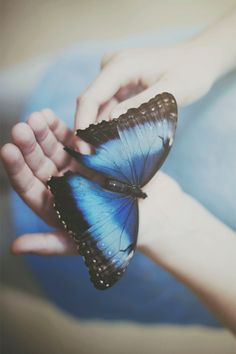 I am fond of butterflies. They are so delicate!