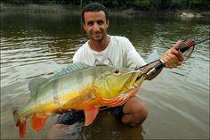 pescaria de peixe grande no pantanal Matogrossense