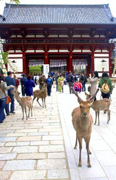 This photo really sums up the appeal of Nara Park: Deer and temples. It's easy to visit Nara as a day-trip from Kyoto by focusing on Nara Park. Nara, Beautiful In Japanese, South Korea North Korea, Go To Japan, Japan Trip, Visit Japan, Art Occidental, Japan Holidays, Japanese Landscape