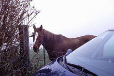 Technik machte es möglich Horses, Animals, Automobile, Animales, Animaux, Animal, Animais, Horse