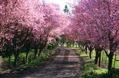 Allées: the magic of tree-lined paths