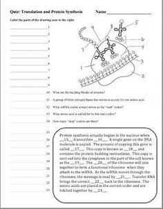 Coloring Worksheet That Explains Transcription And Translation  Dna Deoxyribonucleic Acid Rna Protein Synthesis Quizzes Set Of