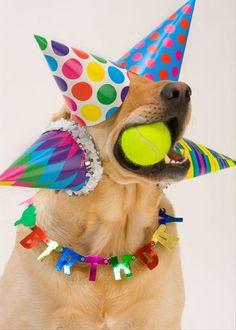 60 pics lady gaga birthday, happy birthday wishes, happy birthday animals f Happy Birthday Animals, Happy Birthday Dog, Animal Birthday, Funny Birthday, Birthday Hats, Birthday Parties, Happy Birthday Labrador, Birthday Funnies, Sister Birthday
