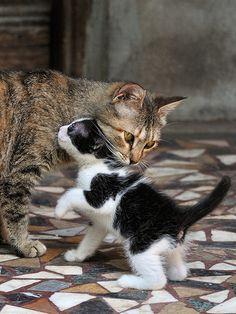 tenderness | Flickr - Photo Sharing!