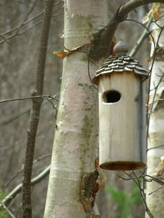 I've put this birdhouse up in the birch grove, but I don't really expect it to be used. Looks nice, though.