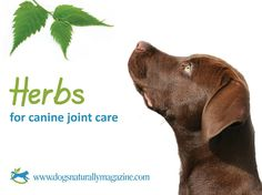HERBS FOR CANINE JOINT CARE  Although degenerative arthritis is progressive, it can be slowed down with the right tools. Therapeutic herbs can play a large role in controlling pain and inflammation as well as helping slow down the degeneration.  Learn what herbs can help your dog manage arthritis pain and inflammation: http://www.dogsnaturallymagazine.com/herbs-for-canine-joint-care/