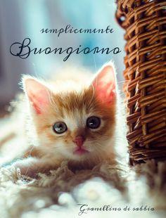 by lookowana on deviantART I Love Cats, Crazy Cats, Cute Cats, Funny Cats, Kittens And Puppies, Cats And Kittens, Neko, Baby Animals, Cute Animals