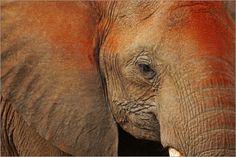 Manuel Schulz - Elefant in Südafrika