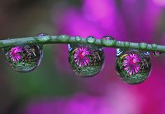 45 Stunning Examples of Water Drop Reflection Photography Reflection Photos, Reflection Photography, Macro Photography, Amazing Photography, Flower Photography, Photography Sites, Amazing Flowers Photos, Most Beautiful Flower Pictures, Flower Photos