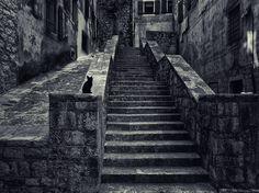 Black Cat on Stone Steps - Kotor, Montenegro