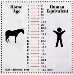Funny Horses, Cute Horses, Pretty Horses, Beautiful Horses, Horse Riding Quotes, Horse Riding Tips, Horse Quotes, Horse Age, Horse Horse