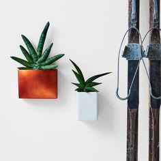 New Release – EasyCare Plants