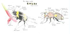 Nancy Rothwell Award: Year Old Category – Bumblebee by Tabetha Davies age Find out more: Bee, Illustrations, Drawings, Animals, Sketches, Animais, Animales, Animaux, Illustration