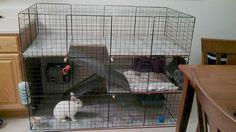 Rabbit cage Indoor BIG BUNNY & CAT Condo deluxe hutch pet pen w/ carpeted floors-DIY Rabbit cage idea. Description from pinterest.com.