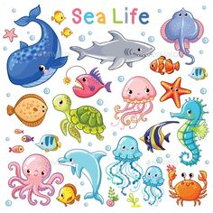 Sea Animal in Childrens Style. by svaga Vector Sea set. Sea animal in childrens style. Sea Animals Drawings, Cartoon Sea Animals, Cartoon Fish, Fish Drawings, Cartoon Drawings, Cute Drawings, Fish Drawing For Kids, Sea Drawing, Aliexpress Scrapbooking
