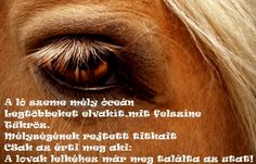 Equestrian Quotes, Horse Riding, Marvel, Horses, Prints, Movie Posters, Animals, Paintings, Pictures