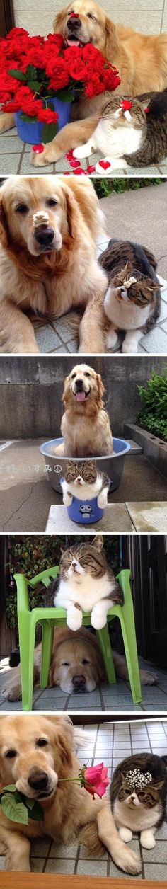 The most adorable best friends ever animals gatos, animales Animals And Pets, Baby Animals, Funny Animals, Cute Animals, Animal Babies, Amor Animal, Mundo Animal, I Love Dogs, Cute Dogs