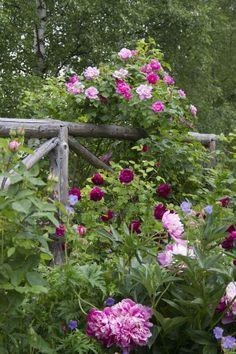 Helen Fredholm's garden