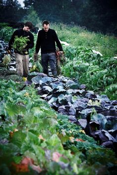 vegetable garden  // Great Gardens & Ideas //
