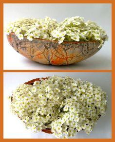 Raku-Schale Orange