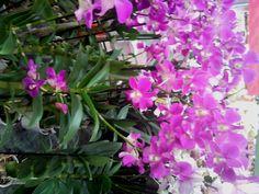 Pro bohaté květy orchideje - Orchideje jak pěstovat doma