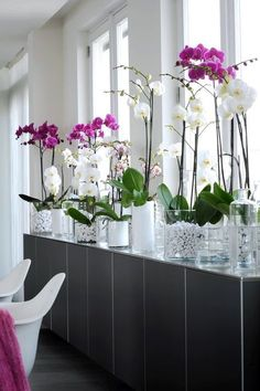 Life-Changing Plants That Filter Your Air – Safe For Cats Too! Moth orchids are absolutely GORGEOUS and great for cleaning indoor air!Phalaenopsis Orchid - Modern I like the glass vases with stones. I would probably use pebbles with agates. Orchids Garden, Orchid Plants, Orchid Pot, Moth Orchid, Flowers Garden, Growing Ginger Indoors, Common House Plants, Plantas Indoor, Types Of Orchids