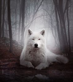 Silence of the Wolf by Aeternum-Art.deviantart.com on @deviantART
