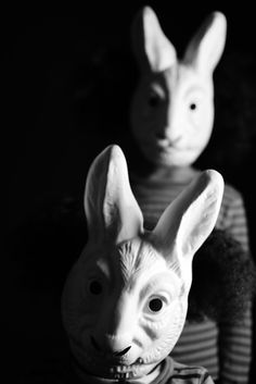 today ... bunnies by quirky collective?
