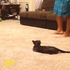 Erst hüpft die Spinne, dann die Katze...