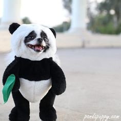 What an adorable panda puppy dog Costume idea for Christmas. This is the Best Christmas dog costume gift for little cute pets. No one can guess if its a dog or a Panda. Panda Costumes, Dog Halloween Costumes, Pet Costumes, Small Dog Costumes, Halloween Ideas, Halloween Stuff, Costume Ideas, Teddy Bear Costume, Puppy Costume