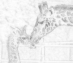 Masi Giraffe Coloring Page Zoo Animal Coloring Pages, White Pencil, Zoo Animals, Colored Pencils, Animal Pictures, Black And White, Baby, Colouring Pencils, Black N White