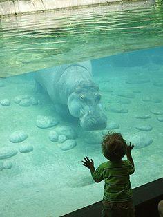 FamilyFun's Top 12 Family Vacation Destinations #8 Toledo Zoo, Toledo, OH