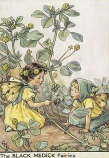 Cicely Mary Barker | The Black Medick Fairies