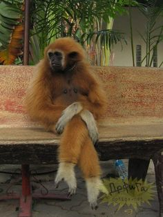 Just act natural. Let the Zoo Keepers just pass you by. You are just a huge monkey enjoying the da in the park.