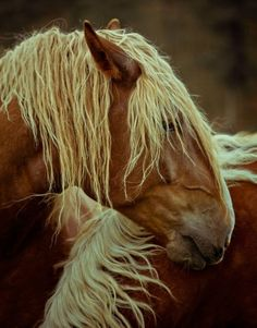 love tan horses with blonde hair