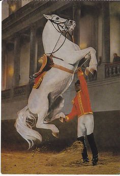 LIPIZZAN HORSE POSTCARD SPANISH RIDING SCHOOL VIENNA AUSTRIA