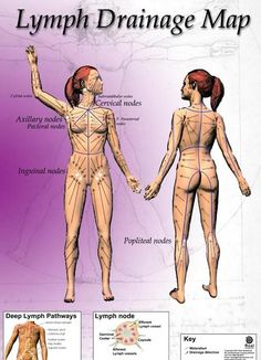 lymphedema drainage | ... lymphatic drainage massage for edema and manual lymphatic drainage