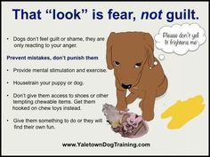 Angst... niet schuldig