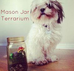 Mason Jar Terrarium via @Kat