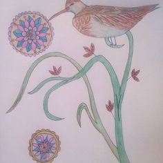 Sandpiper Swirls. Color pencil on paper. By Kelli Cantrell. http://kcantrartideas.weebly.com/