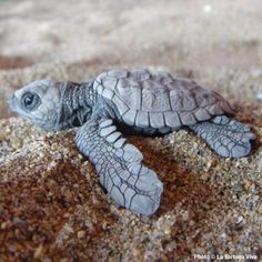 Help protect sea turtles! Donate today to promote population replenishment!