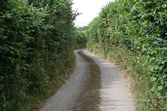 Google Image Result for http://upload.wikimedia.org/wikipedia/commons/0/03/Narrow_Lane_with_High_Hedges_-_geograph.org.uk_-_200225.jpg