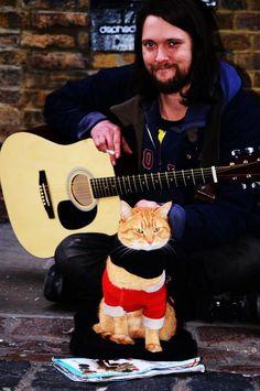 Every Life Should Have Nine Cats - Cat's Nine Lives Orange Tabby Cats, Red Cat, Blue Cats, Crazy Cat Lady, Crazy Cats, A Cat Named Bob, Bobcat Pictures, Street Cat Bob, Tier Fotos