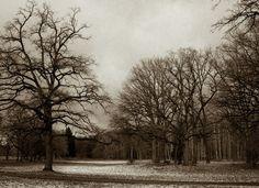 Your winter wonderland