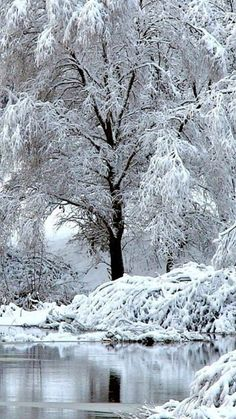 beautiful tree in winter Winter Szenen, I Love Winter, Winter Magic, Winter White, I Love Snow, Snow Pictures, Snow Photography, Winter Photos, Beautiful Winter Pictures