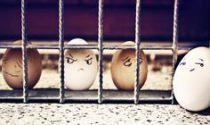 A few bad eggs.