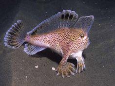 Beautiful Sea Creatures, Deep Sea Creatures, Weird Creatures, Underwater Creatures, Underwater Life, Fish Gallery, Fauna Marina, Cool Fish, Interesting Animals