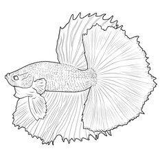 betta fish coloring pages - betta fish drawing google search betta fish
