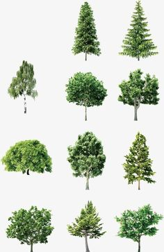 Vector hand-painted trees PNG and Vector Architecture Drawing Sketchbooks, Landscape Architecture Drawing, Architectural Trees, Kylie Jenner, Modern Water Feature, Happy Little Trees, Photoshop Rendering, Dome Of The Rock, Tree Illustration